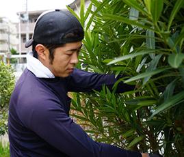 経験豊富な植木職人が直接担当